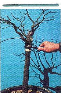 取り木用鋸